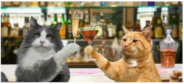 COCKTAILS FOR CATS! post