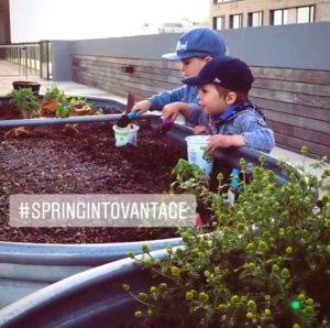 vantage-gardening-2